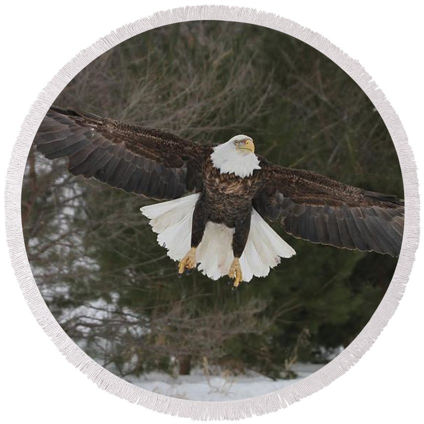 Bald Eagle Round Beach Towel featuring the photograph Red Feather Lift Off by Teresa McGill