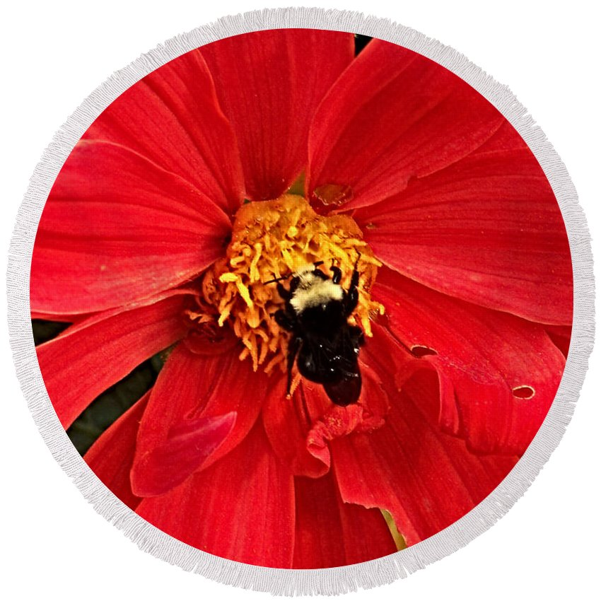 Flower Round Beach Towel featuring the photograph Red Flower And Bee by Anthony Jones