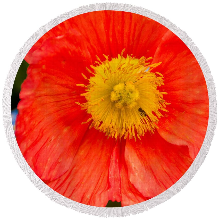 Nature Round Beach Towel featuring the photograph Red Flower by Anna Serebryanik