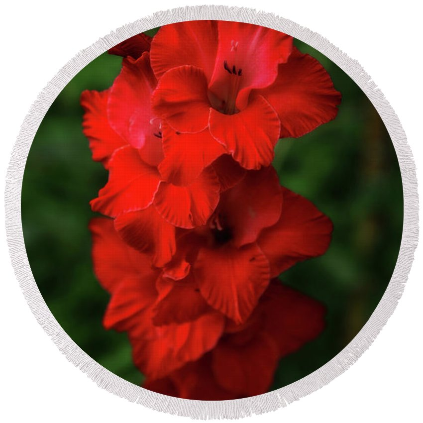 Red Flower Round Beach Towel featuring the photograph Red Flower by Artie Rawls