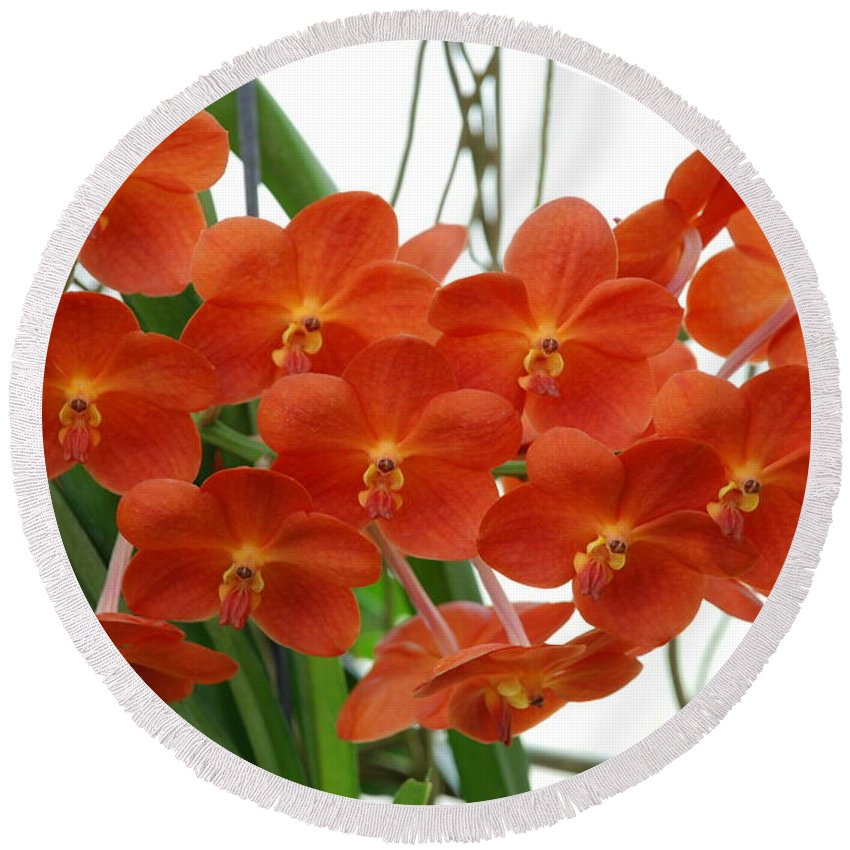 Macro Round Beach Towel featuring the photograph Red Flowers by Rob Hans