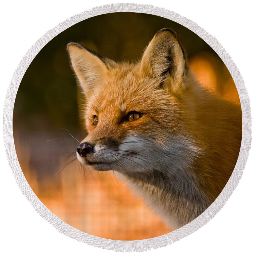 Red Fox Round Beach Towel featuring the photograph Red Fox Pictures 118 by World Wildlife Photography