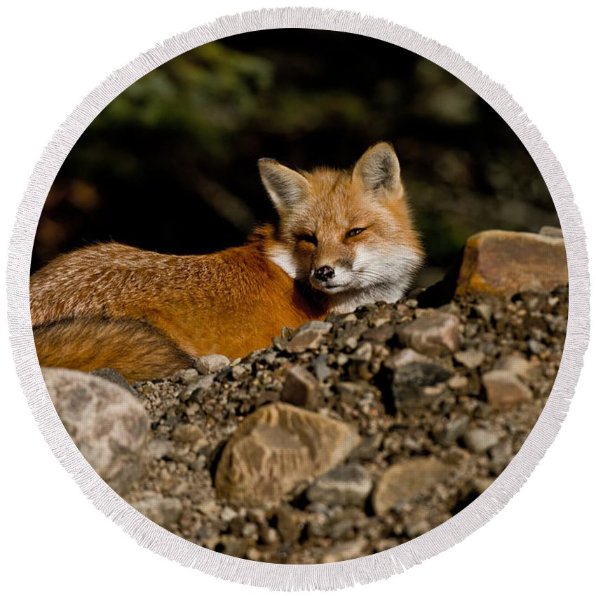 Red Fox Round Beach Towel featuring the photograph Red Fox Pictures 126 by World Wildlife Photography