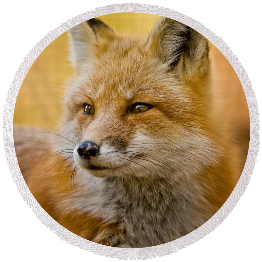 Red Fox Round Beach Towel featuring the photograph Red Fox Pictures 131 by World Wildlife Photography