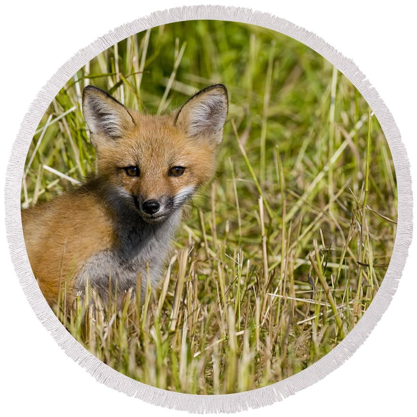 Red Fox Round Beach Towel featuring the photograph Red Fox Pictures 19 by World Wildlife Photography