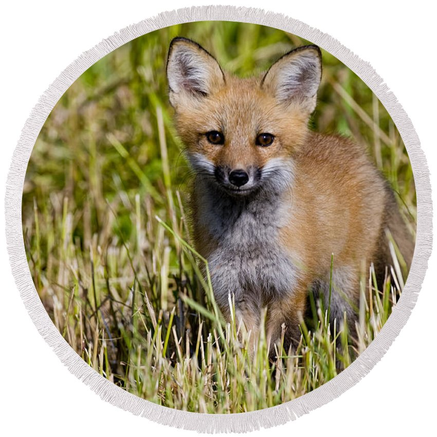 Red Fox Round Beach Towel featuring the photograph Red Fox Pictures 7 by World Wildlife Photography
