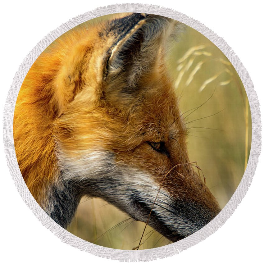 Round Beach Towel featuring the photograph Red Fox by Sheryl Saxton