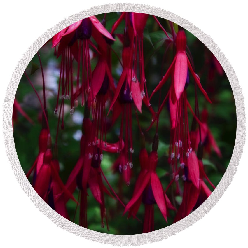 Fuchsia Round Beach Towel featuring the photograph Red Fuchsia by Svetlana Sewell