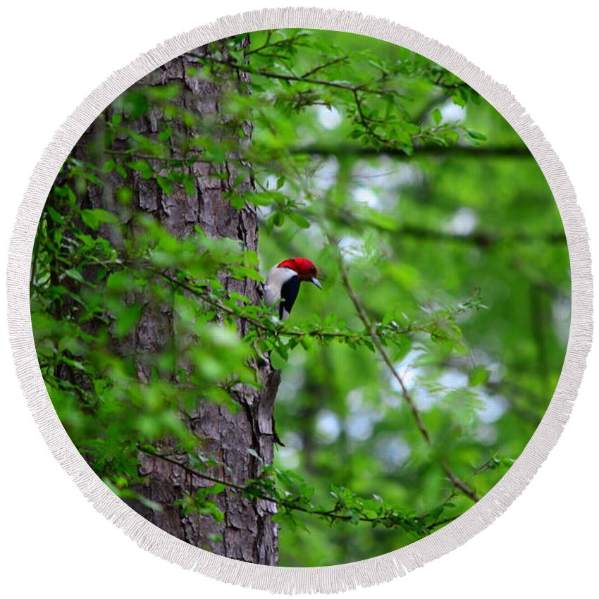 Red Headed Woodpeckers Round Beach Towel featuring the photograph Red Headed Beauty by Lisa Wooten