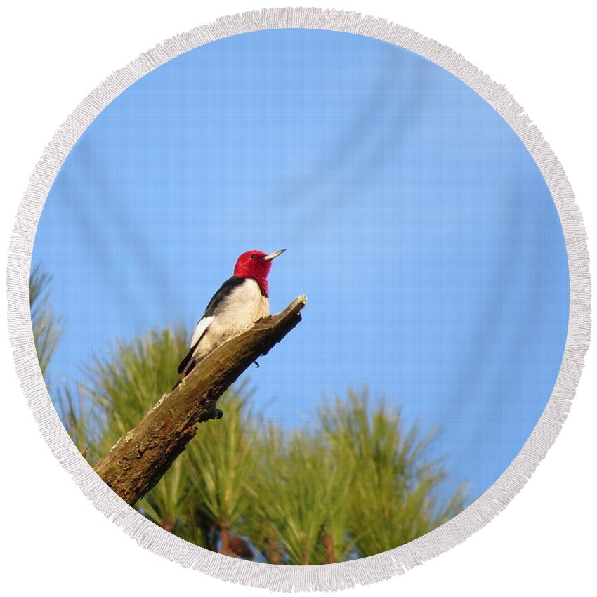 Birds Round Beach Towel featuring the photograph Red-headed Woodpecker by Charles Green