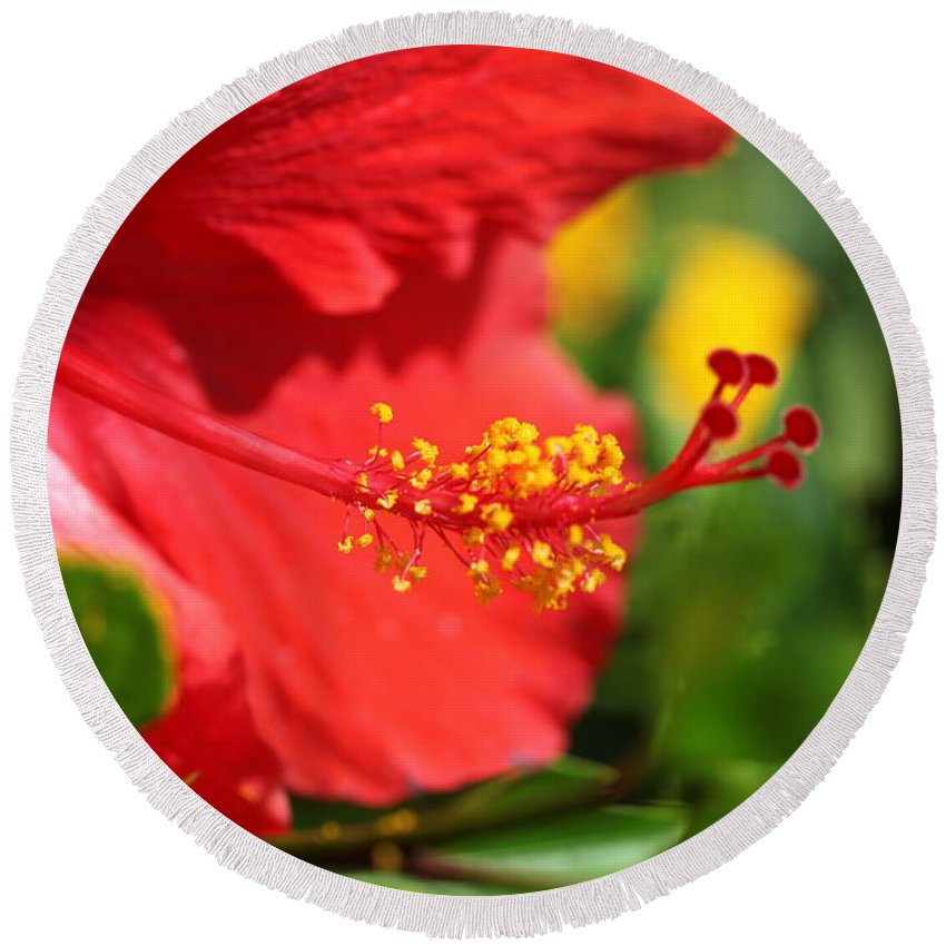Flowers Round Beach Towel featuring the photograph Red Hibiscus And Green by Nadine Rippelmeyer