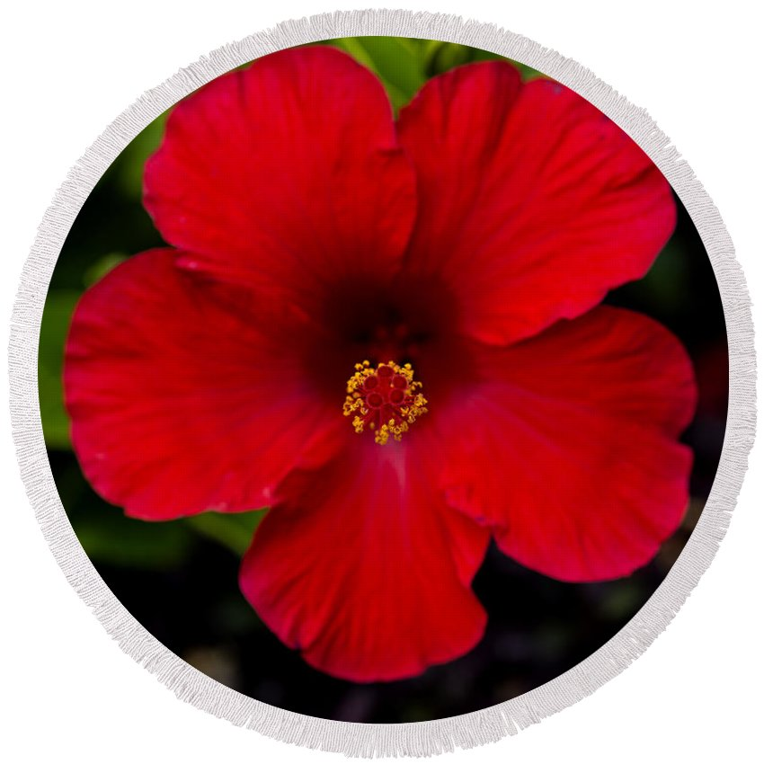 Red Hibiscus - Kauai Round Beach Towel featuring the photograph Red Hibiscus - Kauai by Yefim Bam