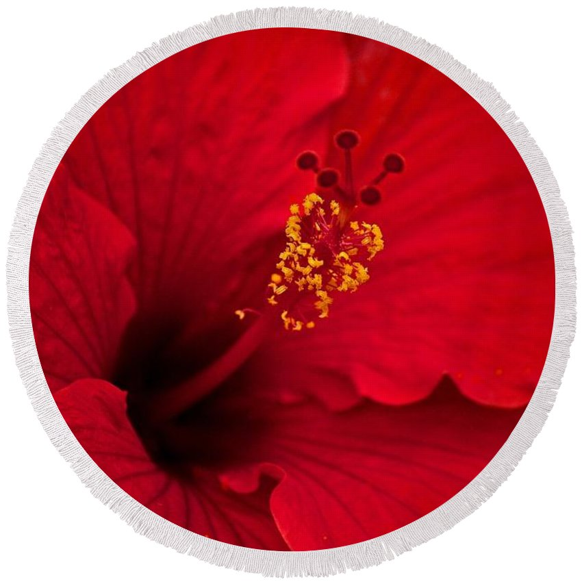 Flower Round Beach Towel featuring the photograph Red Hibiscus by Penny Meyers