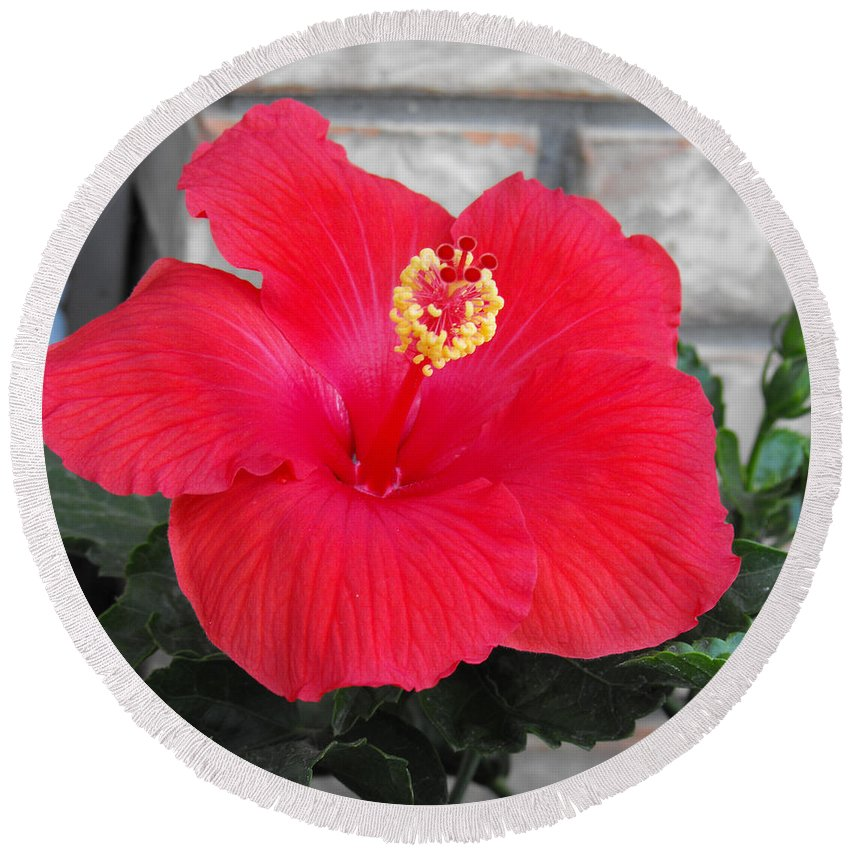 Photography Round Beach Towel featuring the photograph Red Hibiscus by Ruth Palmer