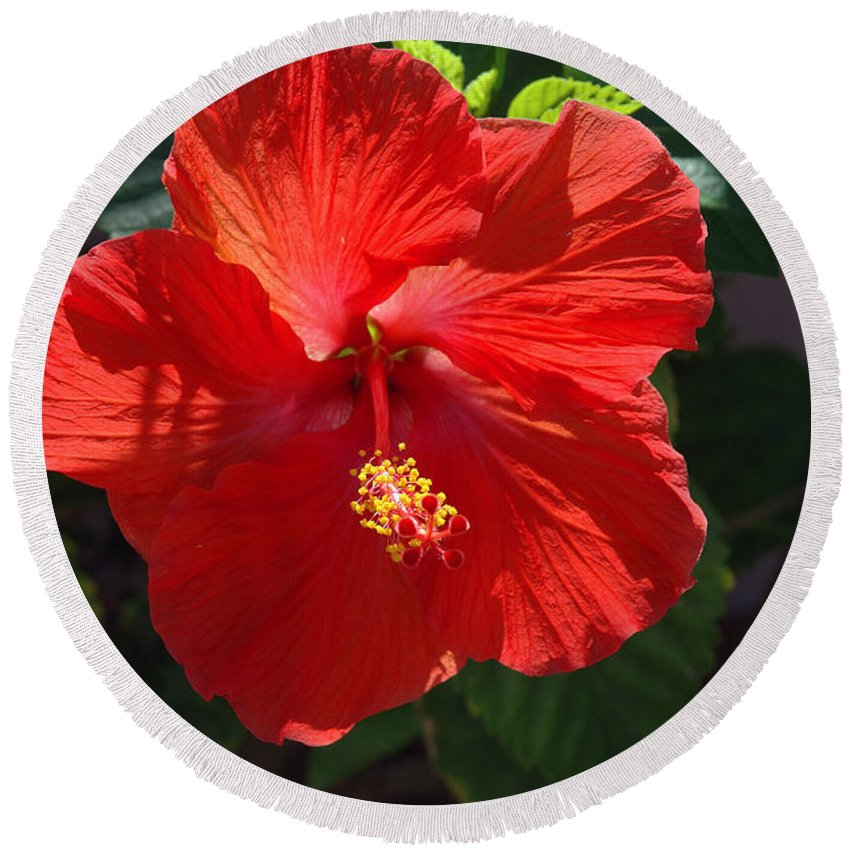 Photography Round Beach Towel featuring the photograph Red Hibiscus by Susanne Van Hulst