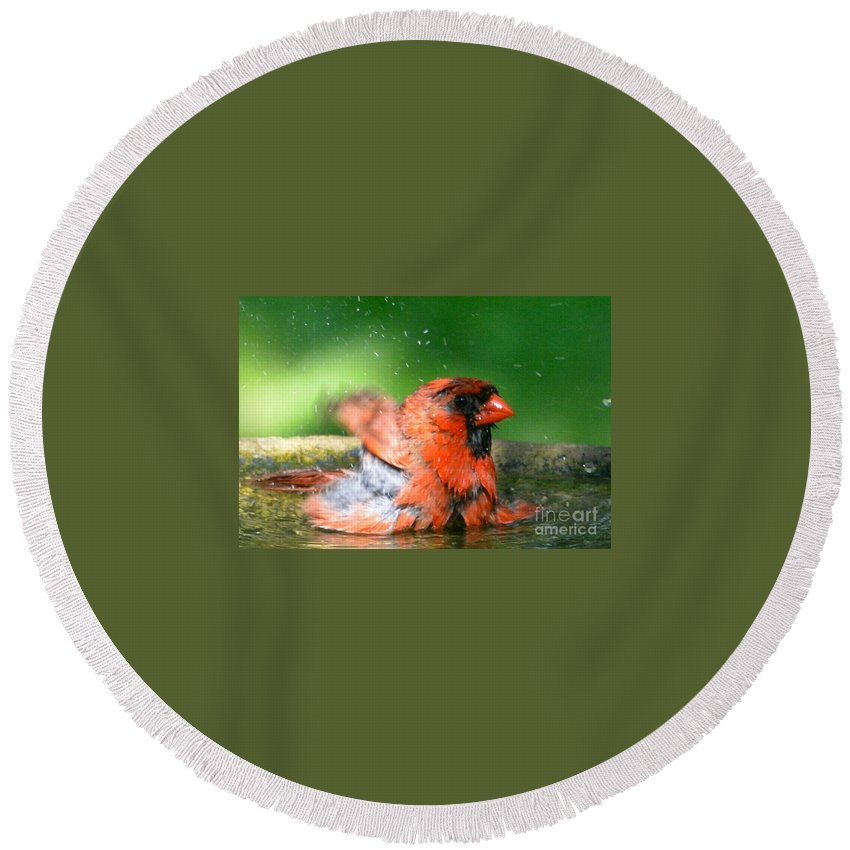 Cardinal Round Beach Towel featuring the photograph Red Hot Bath by David Taylor