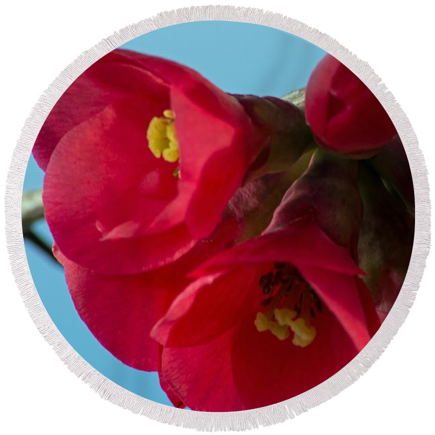 Rose Round Beach Towel featuring the photograph Red Is The Color Of My True Loves Lips by Tikvah's Hope