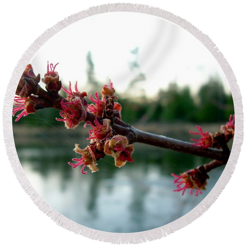 Maple Buds Round Beach Towel featuring the photograph Red Maple Buds At Dawn by Kent Lorentzen