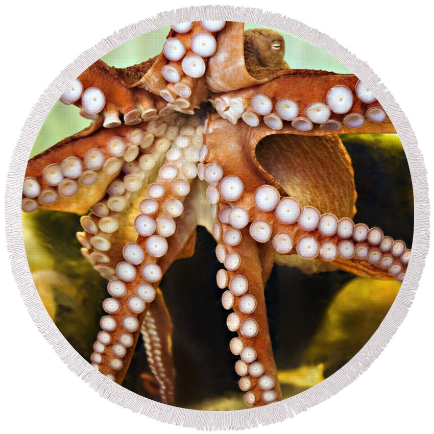 Aquarium Round Beach Towel featuring the photograph Red Octopus by Marilyn Hunt
