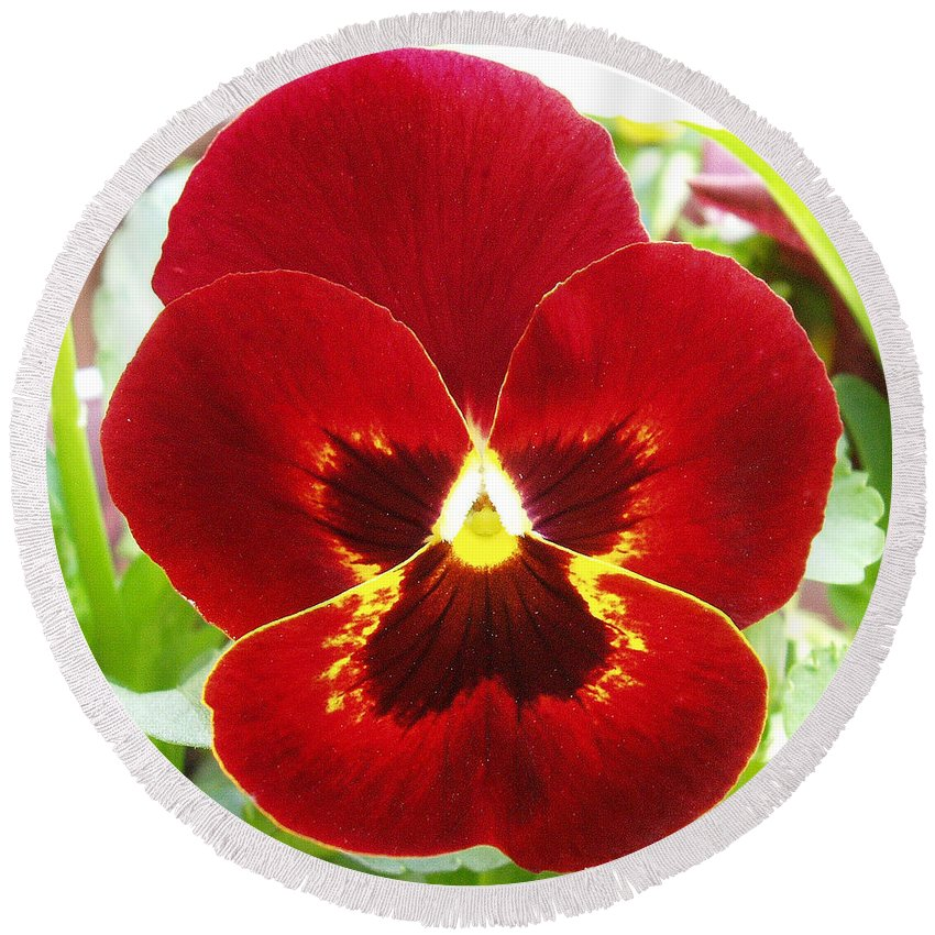 Red Round Beach Towel featuring the photograph Red Pansy by Nancy Mueller
