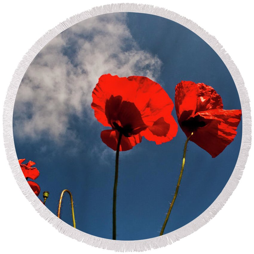 Nature Round Beach Towel featuring the photograph Red Poppies On Blue Sky by Heiko Koehrer-Wagner