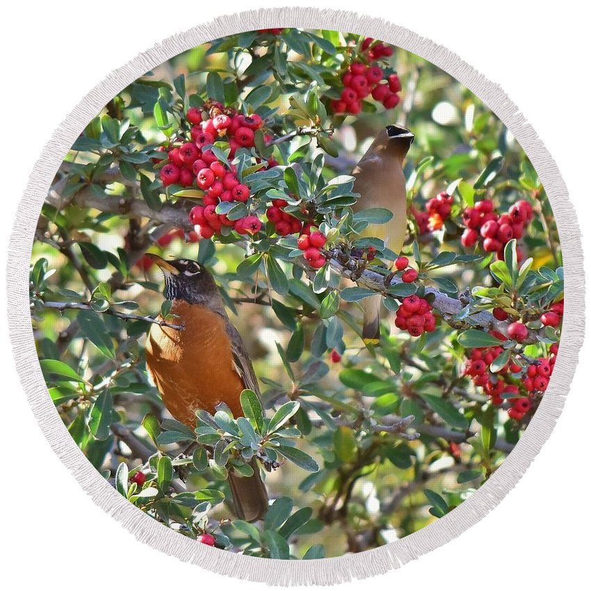 Linda Brody Round Beach Towel featuring the photograph Red Robin And Cedar Waxwing 1 by Linda Brody