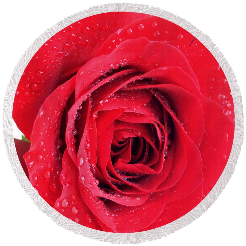Red Rose Round Beach Towel featuring the photograph Red Rose by Kathy M Krause