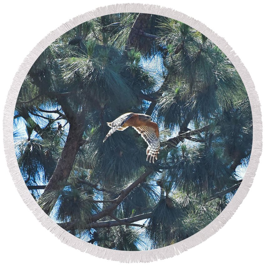 Linda Brody Round Beach Towel featuring the photograph Red Shouldered Hawk Flying Away 1 by Linda Brody
