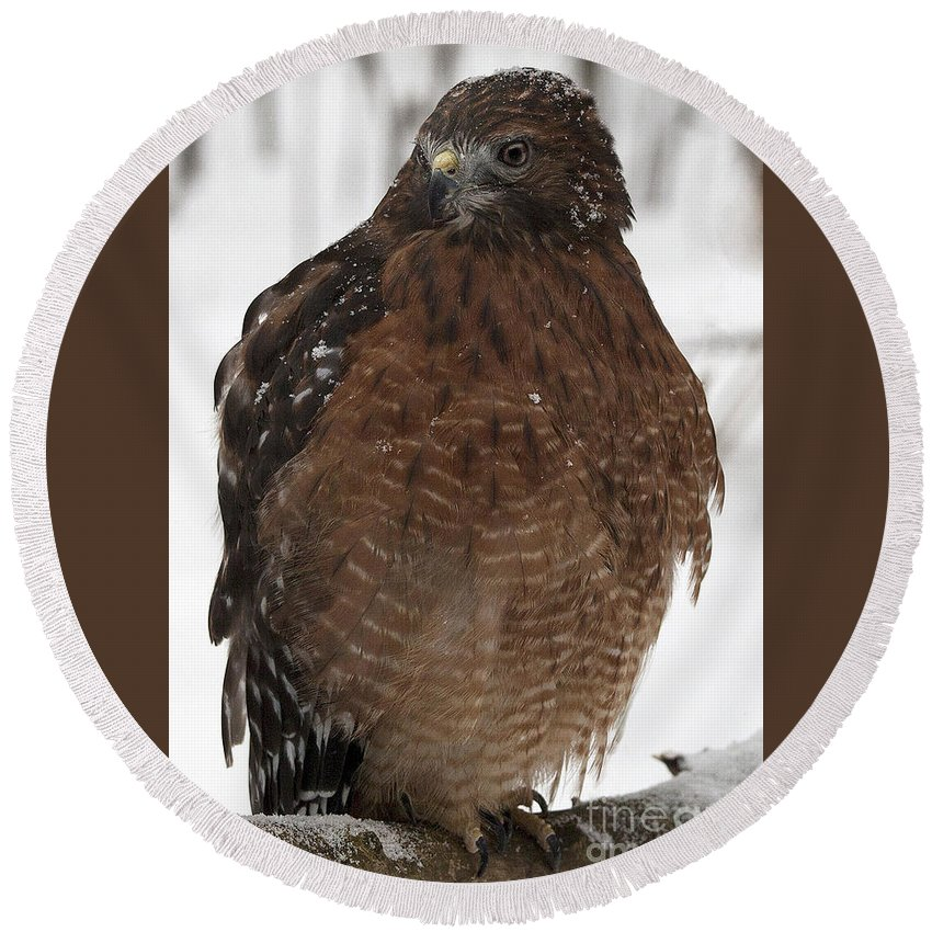 Red Shouldered Hawk Round Beach Towel featuring the photograph Red Shouldered Hawk Portrait by Emma England