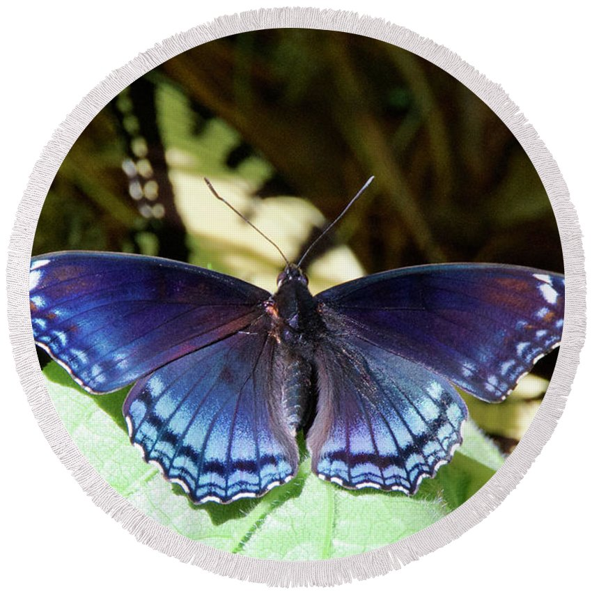 Nature Round Beach Towel featuring the photograph Red-spotted Purple 4257 by Michael Peychich