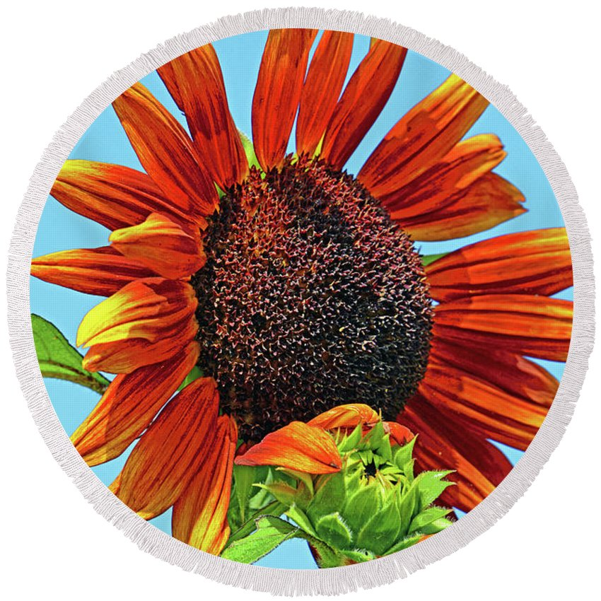 Helianthus Round Beach Towel featuring the photograph Red Sunflowers-adult And Child by Regina Geoghan