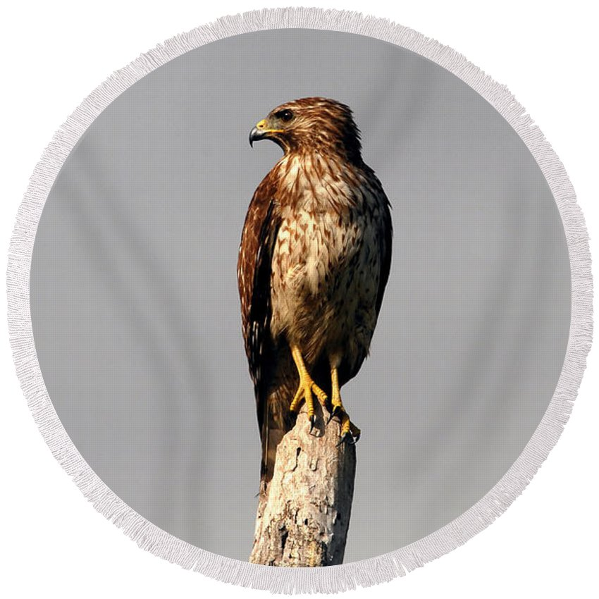 Red Tailed Hawk Round Beach Towel featuring the photograph Red Tailed Hawk by David Lee Thompson