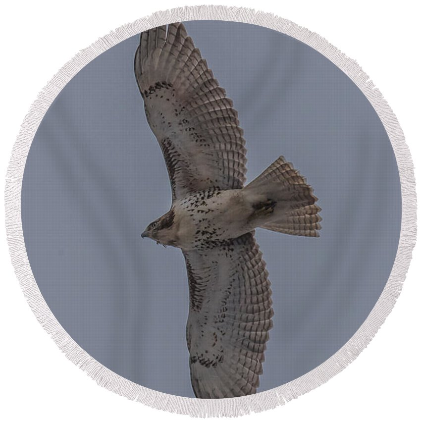 Red Tailed Hawk Round Beach Towel featuring the photograph Red Tailed Hawk Flying by Paul Freidlund