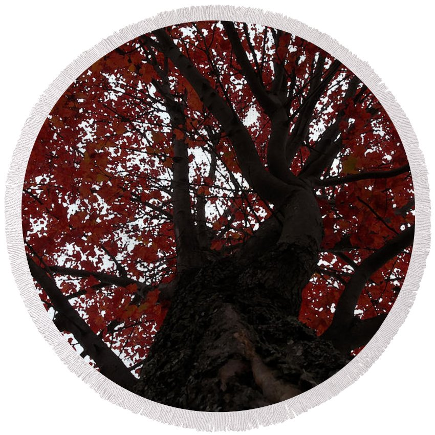Fall Round Beach Towel featuring the photograph Red Tree by David Lee Thompson