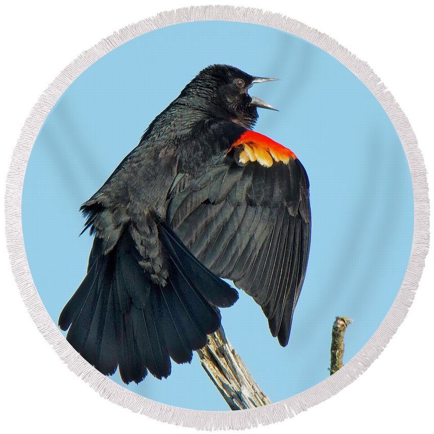 Red-winged Round Beach Towel featuring the photograph Red-winged Blackbird by Bob Stevens