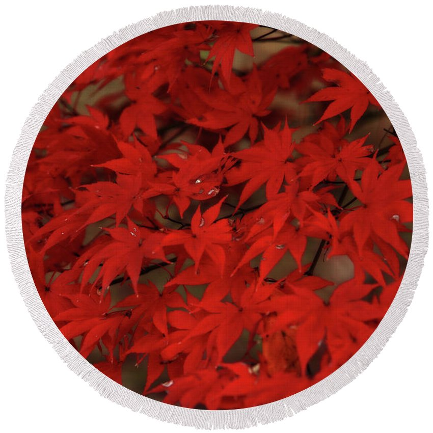 Red Leaves Round Beach Towel featuring the photograph Red With Envy by Artie Rawls