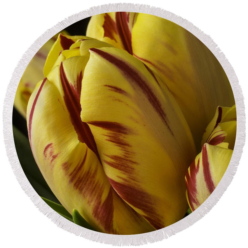 Yellow Round Beach Towel featuring the photograph Red Yellow Tulip by Garry Gay