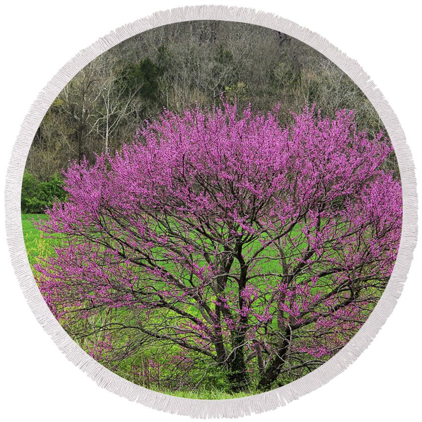Redbud Tree Round Beach Towel featuring the photograph Redbud And Field In Jefferson County by Greg Matchick