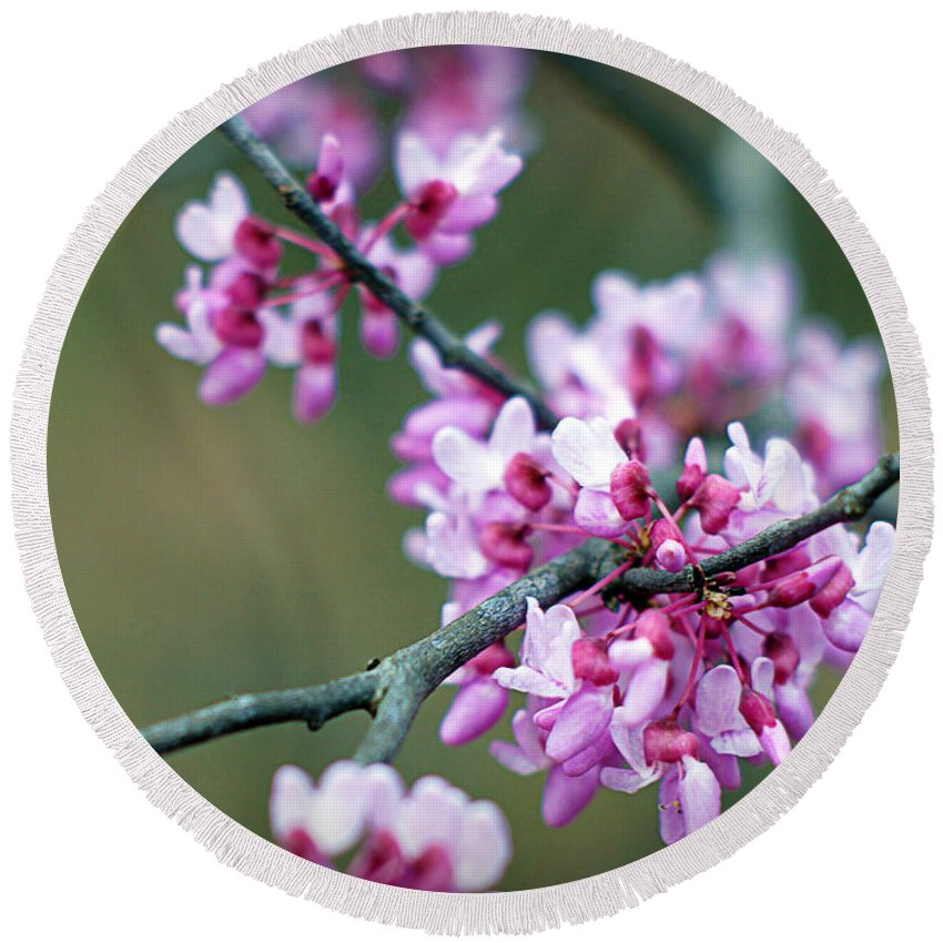 Redbud Round Beach Towel featuring the photograph Redbud by Cricket Hackmann