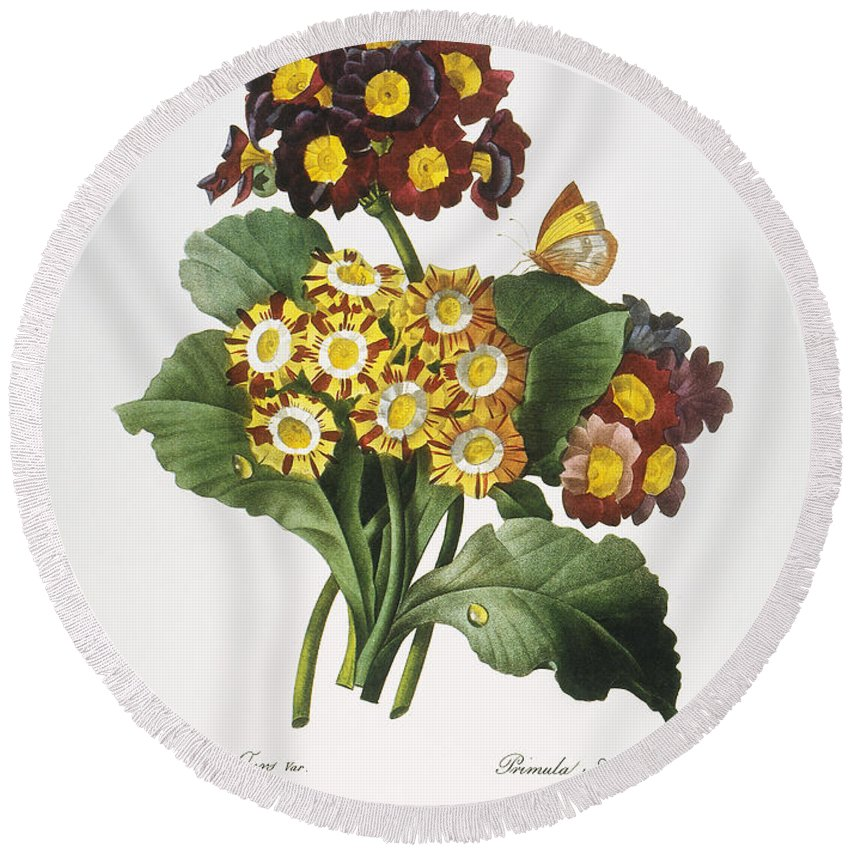 1833 Round Beach Towel featuring the photograph Redoute: Auricula, 1833 by Granger