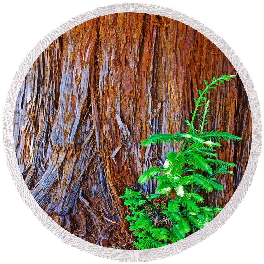 Redwood Tree Trunk At Pilgrim Place In Claremont Round Beach Towel featuring the photograph Redwood Tree Trunk At Pilgrim Place In Claremont-california  by Ruth Hager