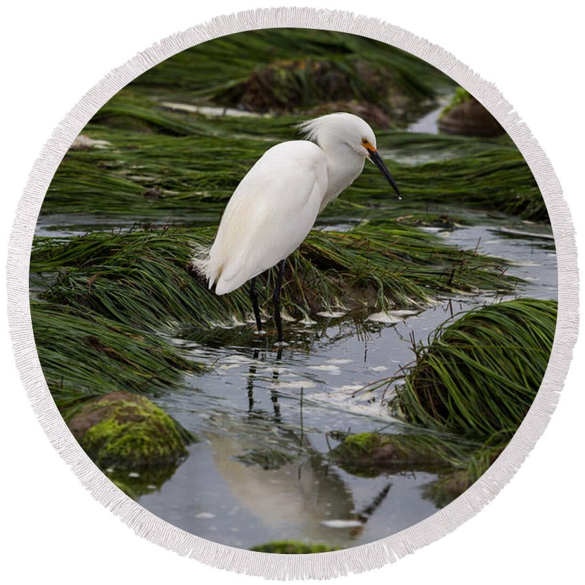 Egret Round Beach Towel featuring the photograph Reflecting At The Tide Pool by John Daly