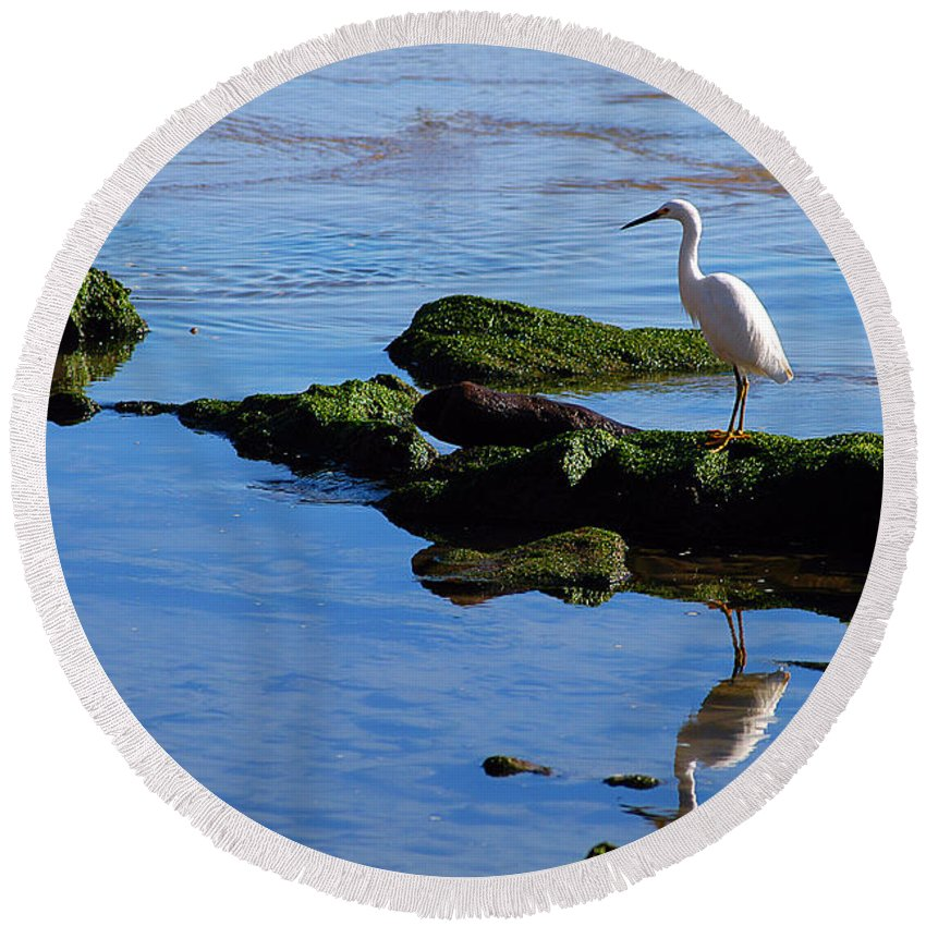 Clay Round Beach Towel featuring the photograph Reflecting On Dinner by Clayton Bruster