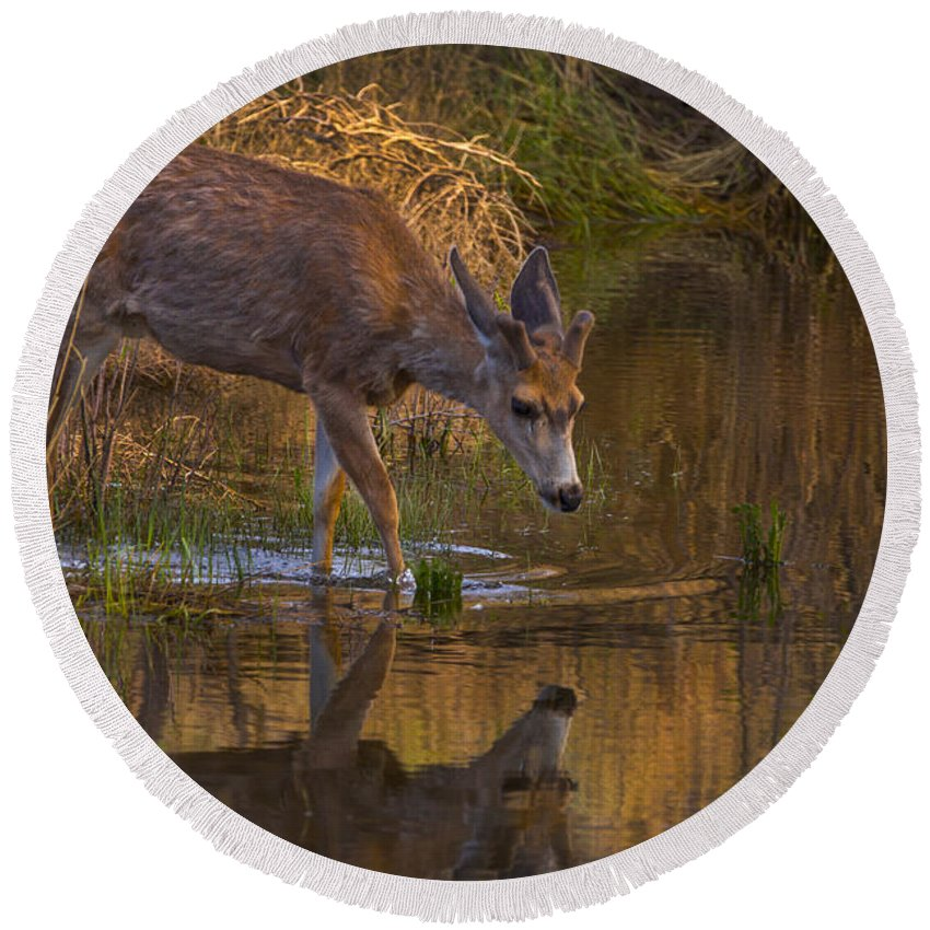 Wildlife Round Beach Towel featuring the photograph Reflection In The Stream by Jeff Shumaker