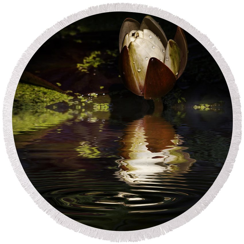 Pond Lily Round Beach Towel featuring the photograph Reflections Of A Lily by Rob Lester