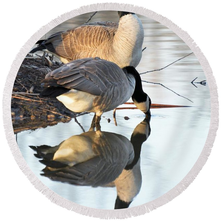 Goose Round Beach Towel featuring the photograph Reflective Geese by Bonfire Photography
