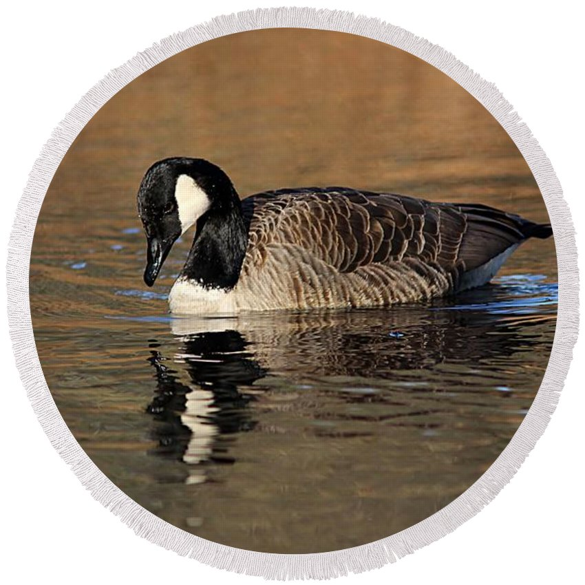 Canada Goose Round Beach Towel featuring the photograph Reflective Moments by Linda Crockett