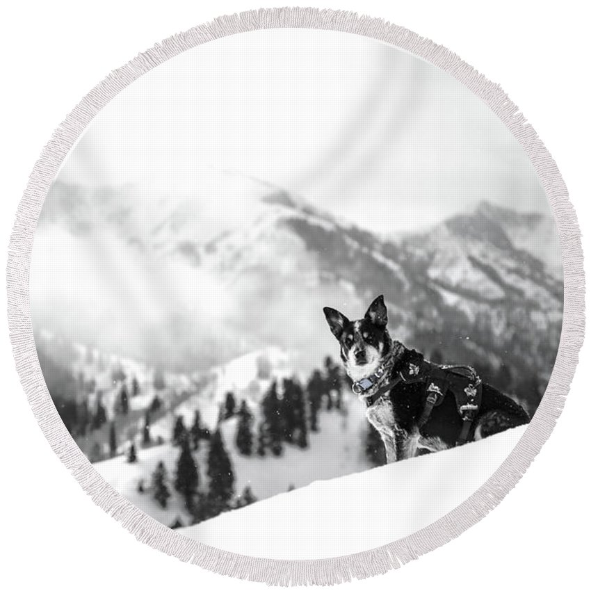 Black And White Round Beach Towel featuring the photograph Rescue Dog by Billy Soden