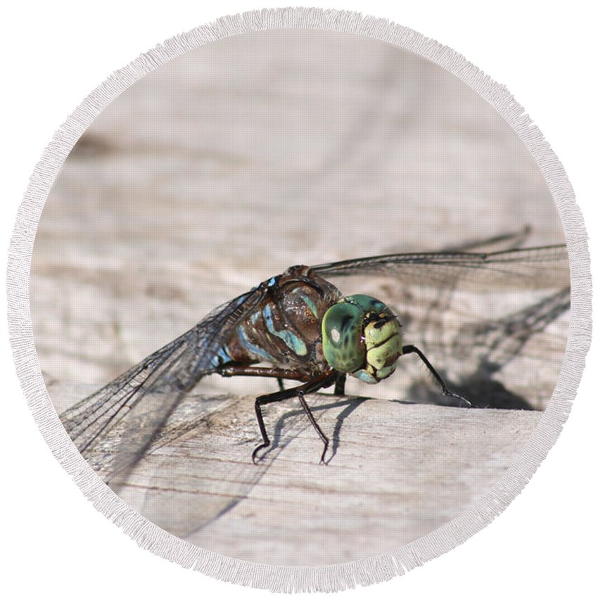 Dragonfly Nature Bug Flying Insect Wings Eyes Colorful Creature Round Beach Towel featuring the photograph Rescued Dragonfly by Andrea Lawrence