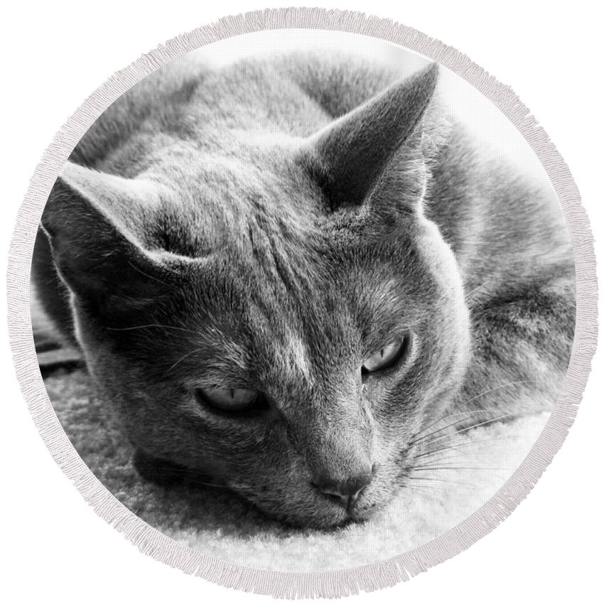 Cats Round Beach Towel featuring the photograph Resting by Amanda Barcon